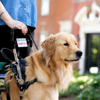 Is this a therapy dog?