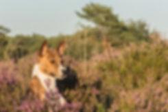 dog-1587053_1920.jpg
