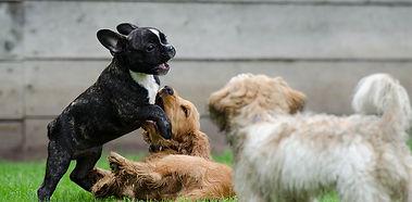 playing-puppies-790638_1280.jpg