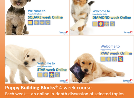 puppy building blocks