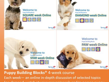 puppy building blocks