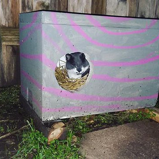 Microwave uses his shelter to keep warm