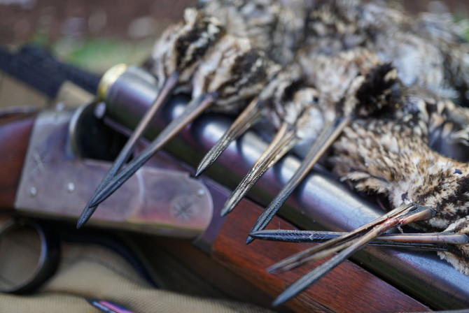 2018 - 2019 Snipe Hunting Seasons by State