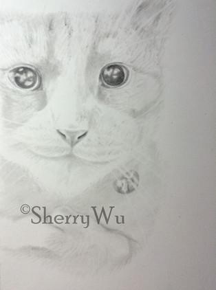 Portrait of my cat Tofu using light saturation