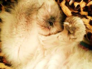 Gatos y bebés recién nacidos en una misma casa
