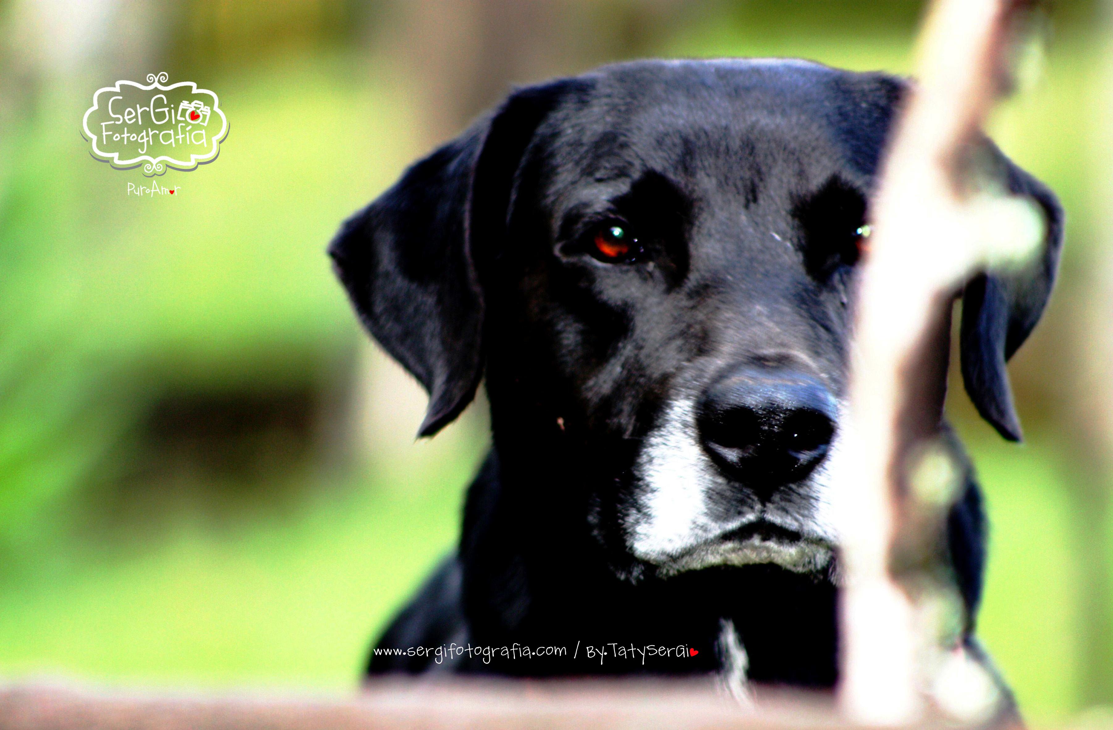 Fotografia de mascotas