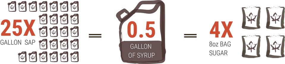 50:1 SAP to Syrup Ratio