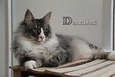 Donalbai cattery.jpg