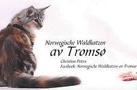 Banner av Tromso.jpg