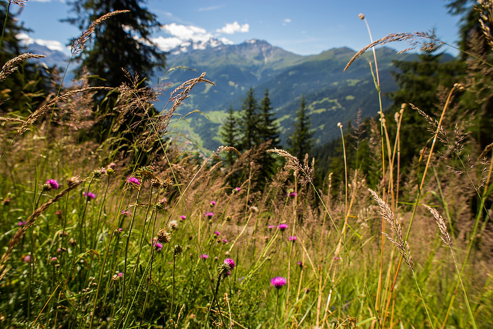 View of Pastures in Verbier