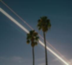 Goodman Masson Actuarial Image of Palm Trees