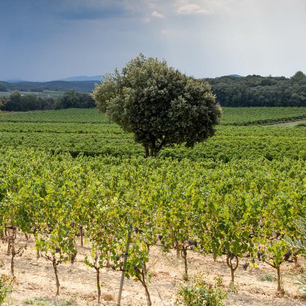 Domaine Terres d'Hachène Vignes