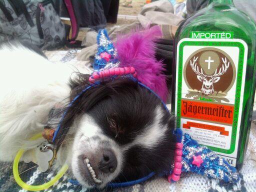partybuddy.jpg