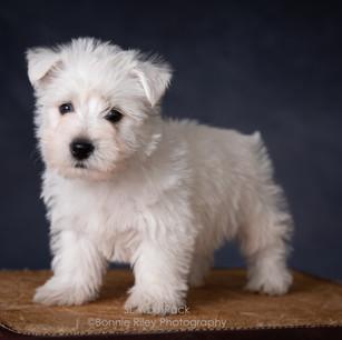 Jess girl puppy