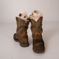 Dixie and Daisy pups