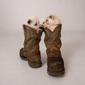 DD Puppies in boots.jpg