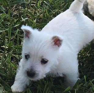 Daisy pup