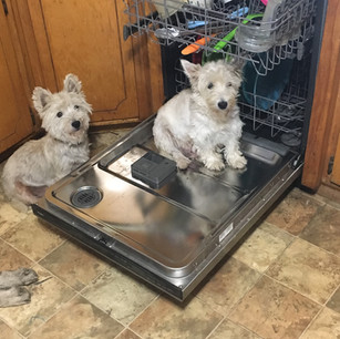 Dixie and Daisy helping with the dishes