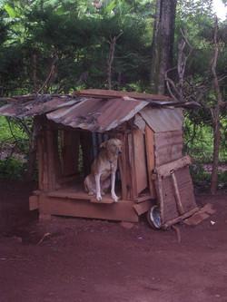 Chapter 26 - Jimmy doghouse