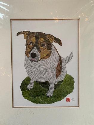 Perie (dog) in field