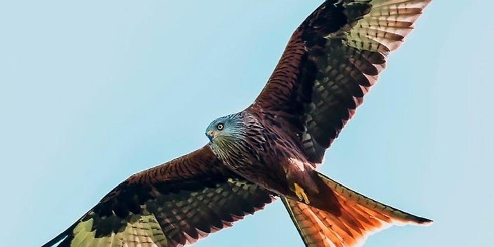 Birds in the Land of Oak & Iron