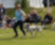 Vissenbjerg 19-08.jpg
