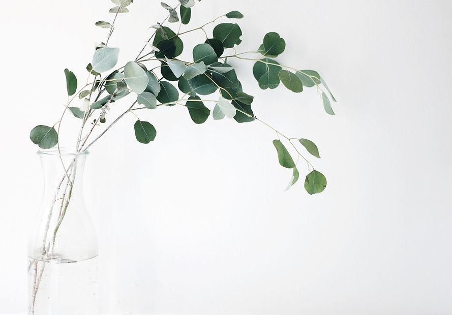 green%20leaf%20plant_edited.jpg