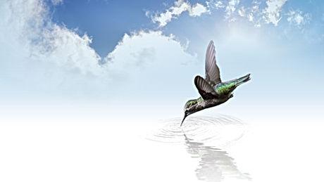 hummingbird-736890.jpg