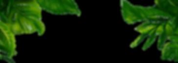 summer-transparent-jungle-leaves-3.png