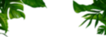 summer-transparent-jungle-leaves-3.png