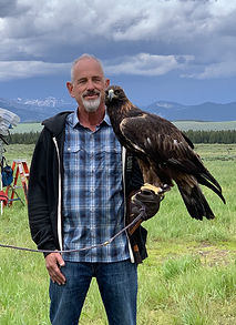 Yellowstone's Golden Eagle