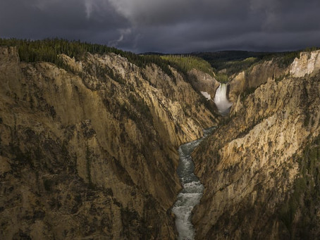 Why Nat Geo's Yellowstone Live Will Be Full of Surprises