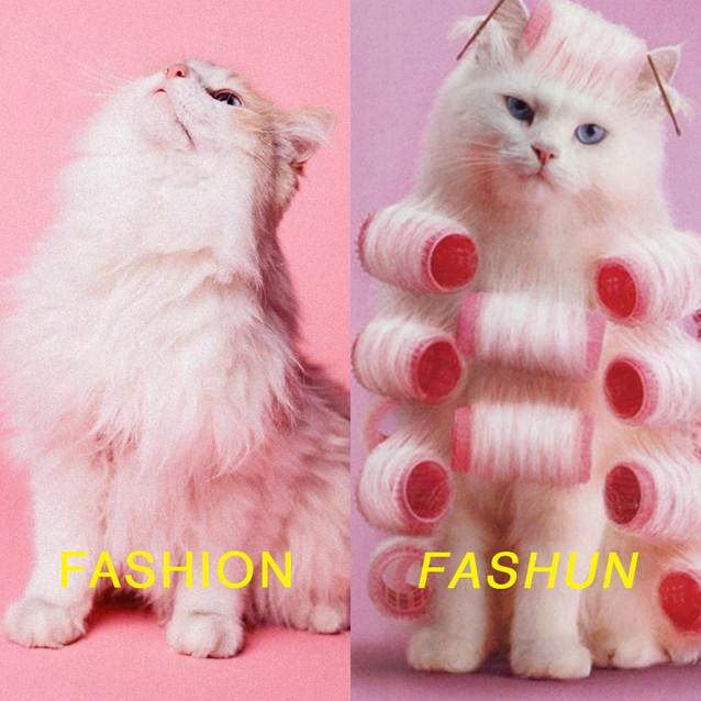 1- CAT.jpg