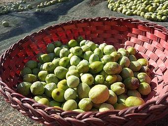 olive basket_2.jpg