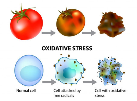 What is oxidation and oxidative stress?