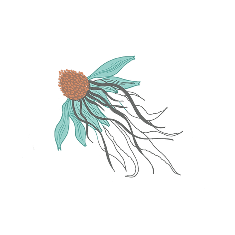 jellyfish%20plus%20coneflower-1_edited.p