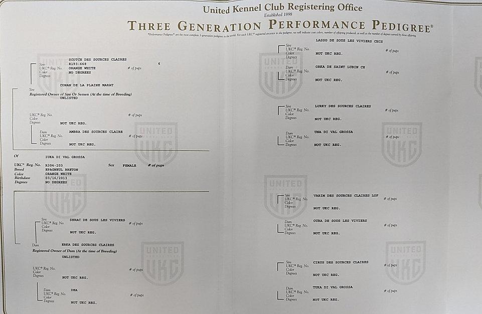 Iuka UKC 3 gen.jpg