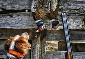 Ty pheasants.jpg