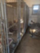 Kennel building inside.jpg