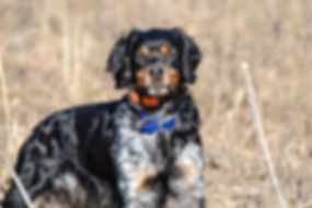 Profile Fergus 2.jpg