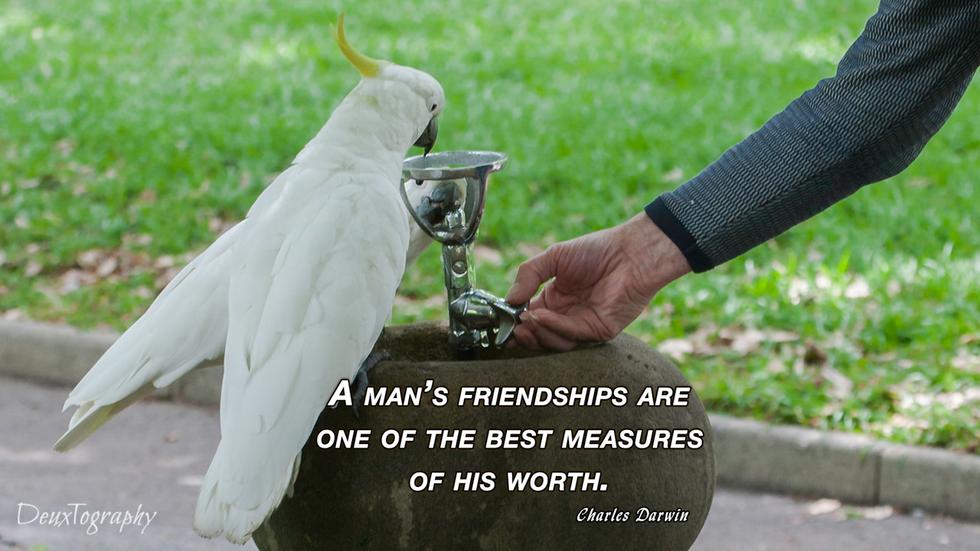 Charles Darwin friends.png