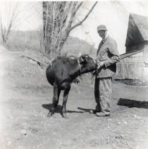 Earl Boyce with heifer circa 1959.jpg