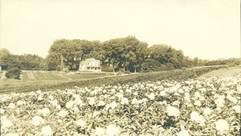 Rosenfield Peoney Farm.jpg