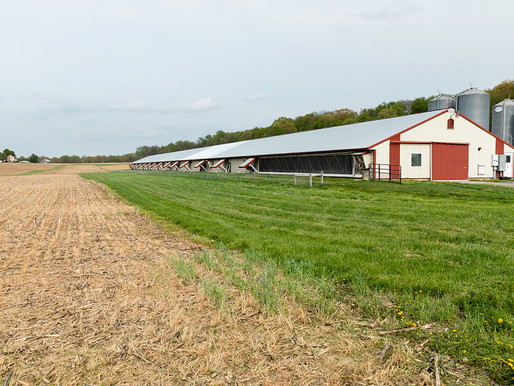 USDA Announces CFAP 2 Funding for Contract Livestock and Poultry Growers