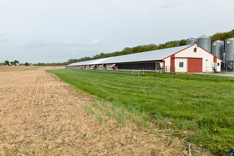 Image of poultry house in PA.  Image by Chesapeake Bay Program