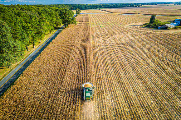 Combine harvesting grain in Maryland. Image by Edwin Remsberg