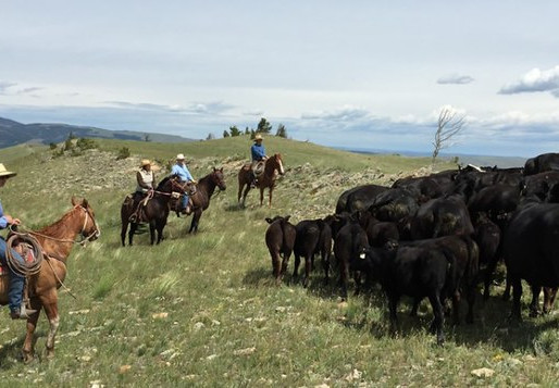 Ninth Circuit Rules in Favor of Beef Checkoff Program
