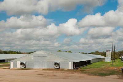 Texas poultry farm by Bob Nichols