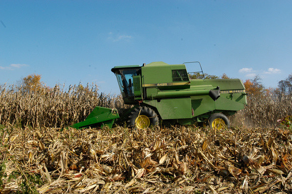 Image of corn being harvested by Edwin Remsberg