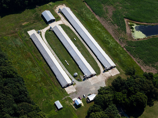 Group Does Not Have Standing to Challenge USDA Loan Guarantee for Poultry Farm